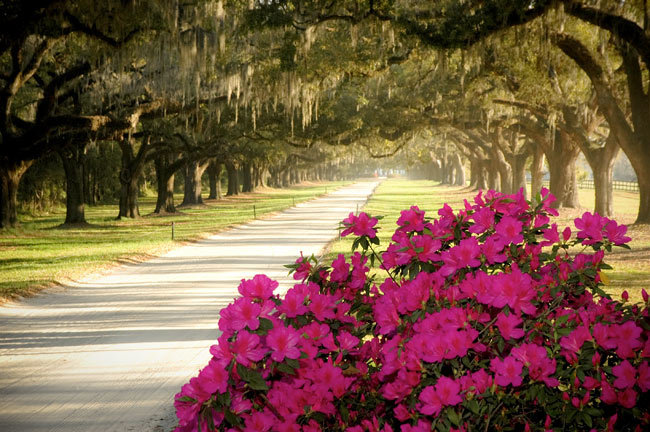 boone-hall-avenue-of-oaks