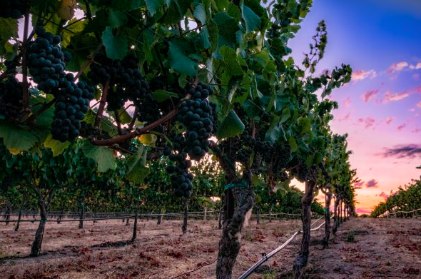 Insider Insights: Five Steps for Planning the Perfect Trip to the Napa Valley
